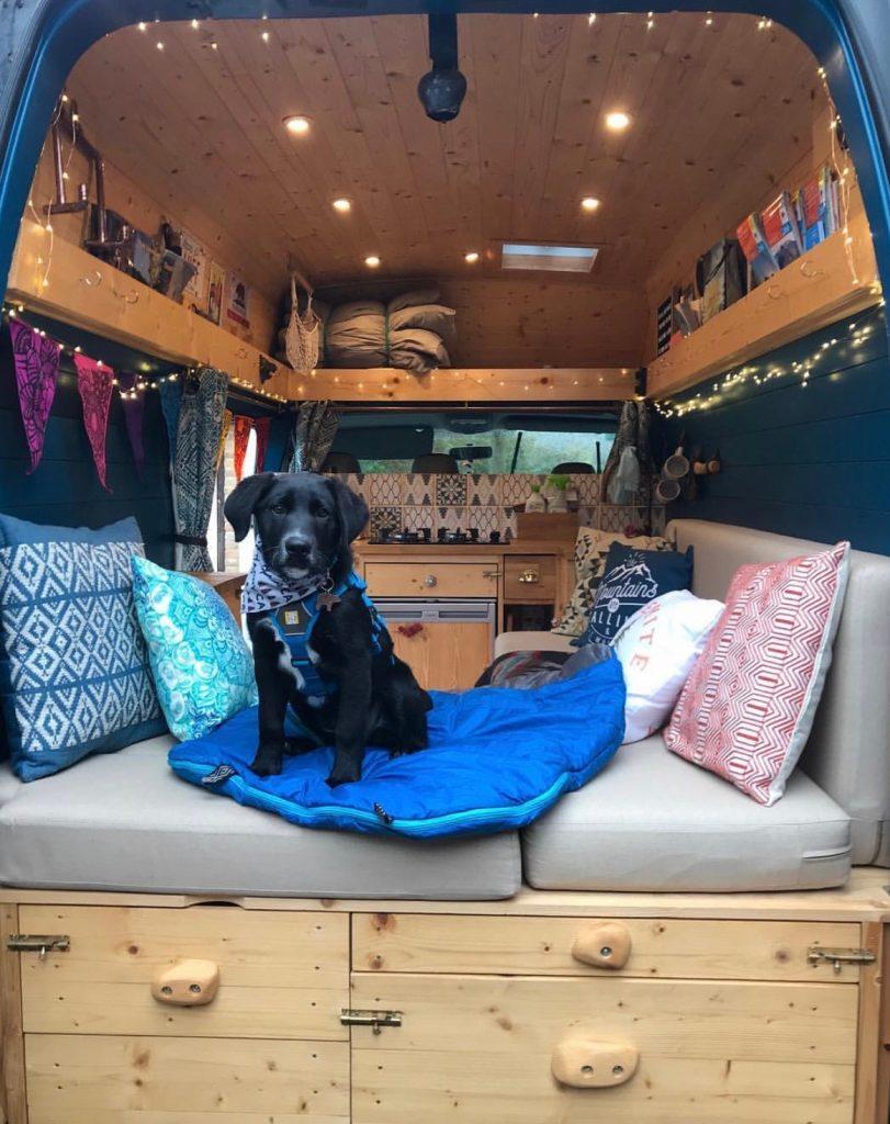 build a campervan - dog