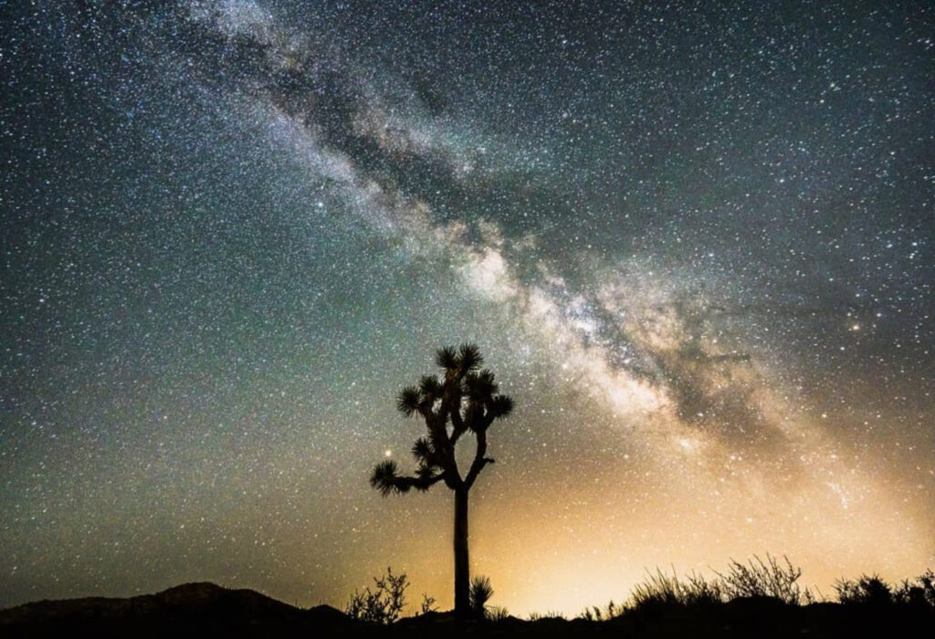 A joshua tree under the starry sky